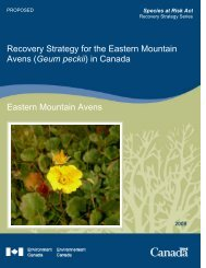 Recovery Strategy for the Eastern Mountain Avens ... - Species at Risk
