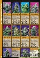 Sweet Seeds 2015 - Deutsch - Seite 4