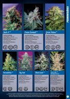 Sweet Seeds 2015 - French - Page 7