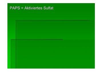 PAPS = Aktiviertes Sulfat