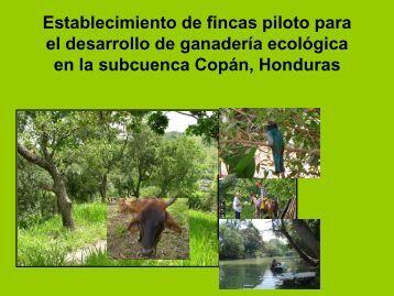 Anexo 7 Ganaderia Ecológica Villanueva.pdf
