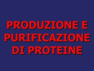 Produzione e purificazione delle proteine