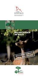Wildschäden im Wald - Land Brandenburg