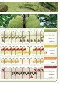 Obst & Gem - Seite 4