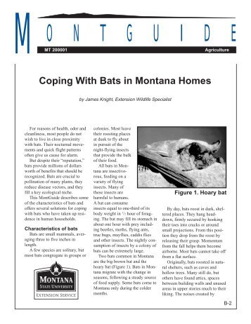 Coping With Bats in Montana Homes - Animal & Range Sciences