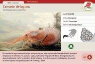 Camarón de laguna - Manosanta