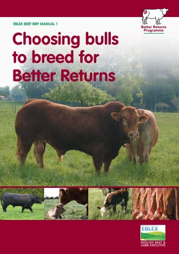 Manual 1 – Choosing bulls to breed for better returns - Eblex