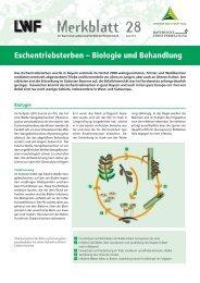 Eschentriebsterben - Bayerische Landesanstalt für Wald und ...