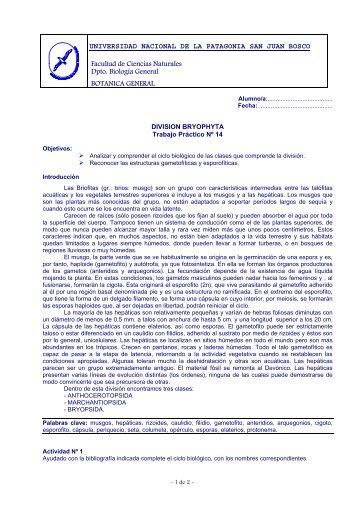 TPNº14 Briofitos - Facultad de Ciencias Naturales - Universidad ...
