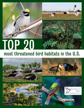 Top 20 Most Threatened Bird Habitats in the U.S. - American Bird ...