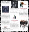 METAL MIRROR #65 - Ramones, Joey Ramone, Ramones-Museum ... - Seite 7