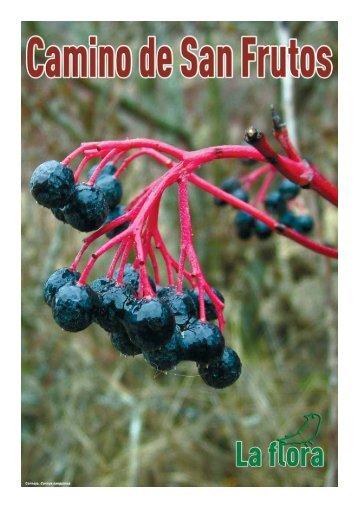 La Flora en el Camino de San Frutos - Segovia