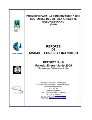 Reporte de Avance No. 8 Enero - Junio, 2005. - Mesoamerican ...