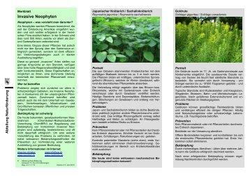 Merkblatt Invasive Neophyten