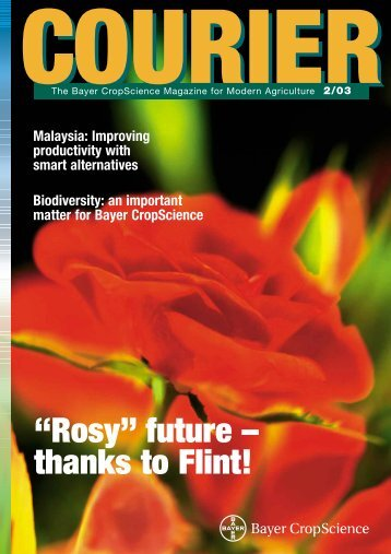 """""""Rosy"""" future – thanks to Flint!"""