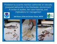 Predation by juvenile hatchery salmonids on naturally produced ...