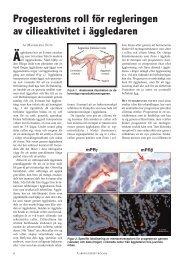 Progesterons roll för regleringen av cilieaktivitet i äggledaren