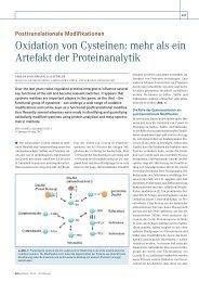 Oxidation von Cysteinen: mehr als ein Artefakt der ... - Biospektrum