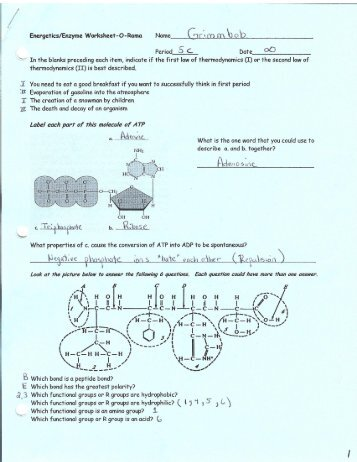 dna and replication worksheet solon city schools. Black Bedroom Furniture Sets. Home Design Ideas
