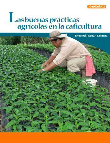 Las buenas prácticas agrícolas en la caficultura - Cenicafé