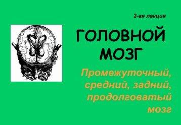 промежуточный, средний, задний, продолговатый мозг