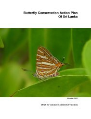Butterfly Conservation Action Plan - Ministry of Environment