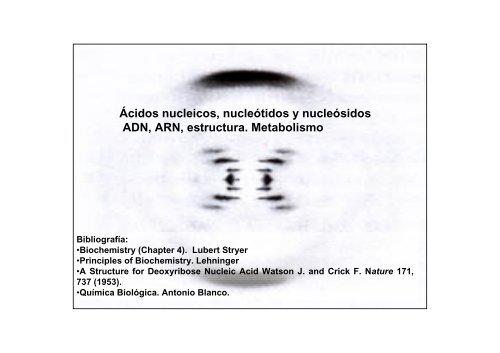 ácidos Nucleicos Nucleótidos Y Nucleósidos Adn Arn