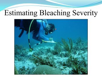 4. Estimating bleaching severity