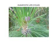 EUKARYOTIC LIFE CYCLES