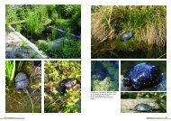 (page de droite). - Association du refuge des tortues