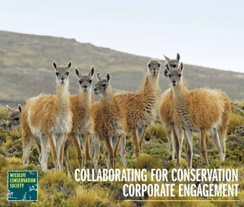 collaborating for conservation corporate engagement - Wildlife ...