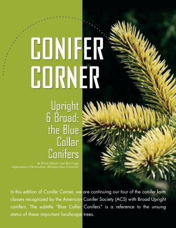 Conifer Corner - Department of Horticulture - Michigan State University