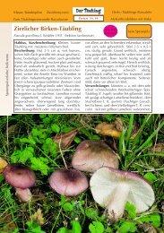 Zierlicher Birken-Täubling Russula gracillima - Tintling