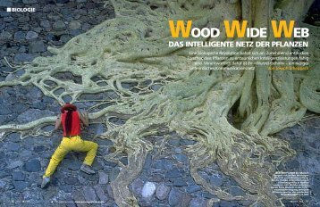 biologie wood wide web das intelligente netz der pflanzen - LINV