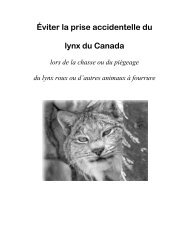 Le lynx du Canada - Species at Risk
