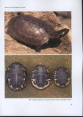Untitled - Association du refuge des tortues - Page 6