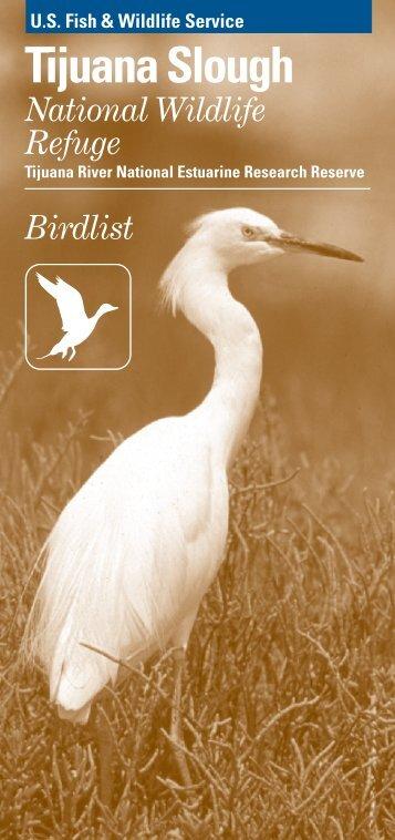 Birds - Tijuana Estuary : TRNERR