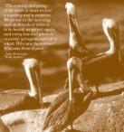 Birds - Tijuana Estuary : TRNERR - Page 2