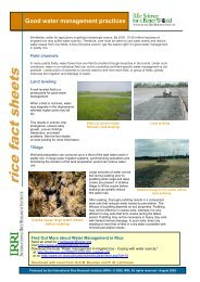 Good water management practices - Rice Knowledge Bank ...
