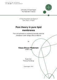 Pore theory in pure lipid membranes