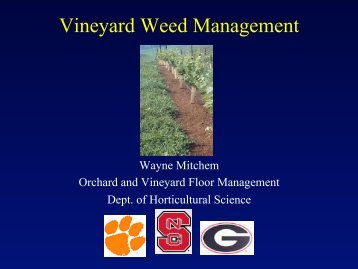 Vineyard Weed Management - The Southern Region Small Fruit ...