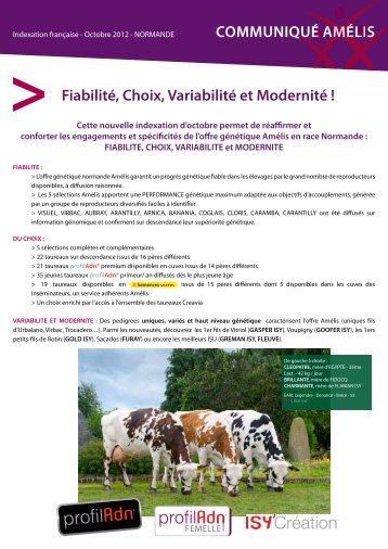taureaux normands Amélis - Web-agri