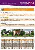 taureaux normands Amélis - Web-agri - Page 3