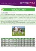 taureaux normands Amélis - Web-agri - Page 5