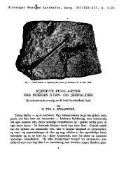 Kjendte fugl-arter fra Norges sten - Museum Stavanger