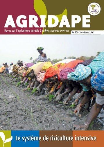 Avril 2013 - Le système de riziculture intensive - IED afrique