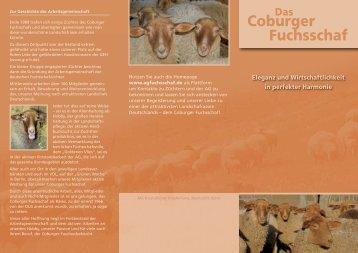 Das Coburger Fuchsschaf