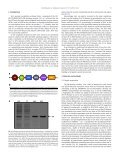 Structural landscape of the proline-rich domain of Sos1 nucleotide ... - Page 2