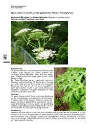 Dokumentation invasive Neophyten (gebietsfremde ... - Oberland Ost
