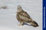Fågelbesöksled Nyköping Söder